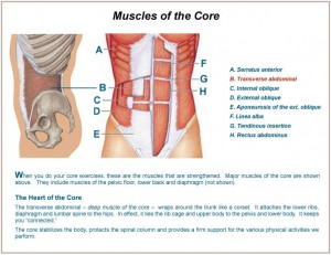 core-muscles3