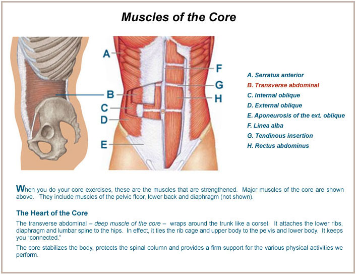 healthy active lifestyle » youtube abdominal muscle diagram blank #15